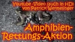Amphibien-Rettungs-Aktion - Stratßentod von Amphibien - Video von Patrick Wermelinger, Youtube